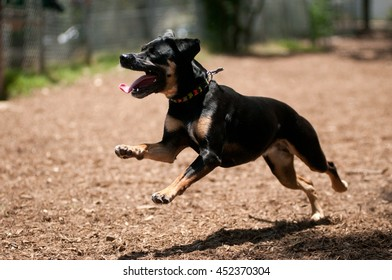 A happy dog running at a dog park