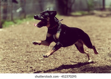 A happy dog running at a dog park, vintage tones