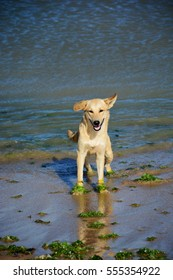 Happy dog in the sea