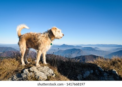 Happy dog standing on a rock with mountains and meadows background
