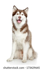 Happy dog, studio portrait on white background