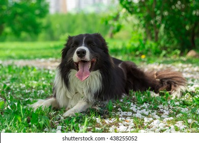 Happy dog at summer park with the petals of appletree flowers