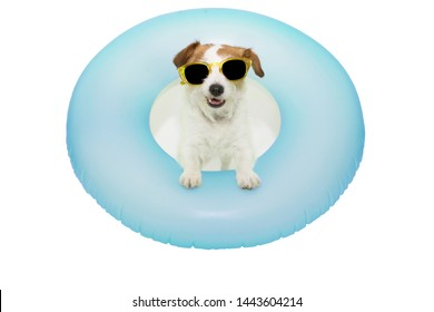 HAPPY DOG SUMMER VACATIONS. JACK RUSSELL INSIDE A INFLATABLE OR BLUE FLOAT POOL WEARING YELLOW SUNGLASSES. ISOLATED AGAINST WHITE BACKGROUND.