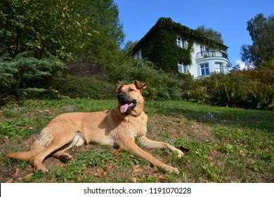 Happy dog sunbathing near house