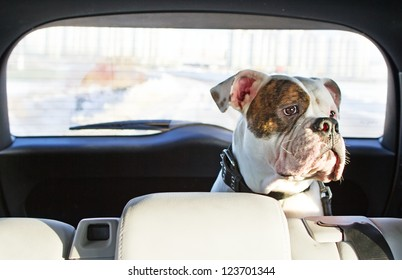 Happy dog traveling in the car boot