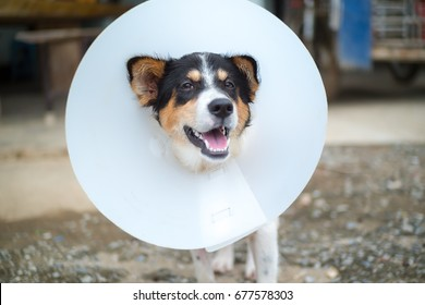 Happy dog wearing an Elizabethan collar (also known as buster collar or cone collar) with blurred background.