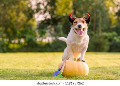 Happy dog wearing Halloween costume standing on pumpkin at lawn