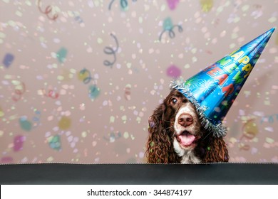 happy dog wearing a new year party hat with confetti falling