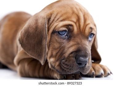happy doggy isolated on white background