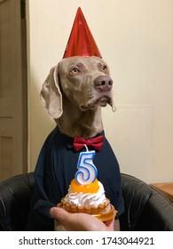 anniversaire de chien heureux.  gâteau de vacances