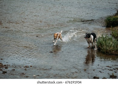 Happy dogs playing outdoor