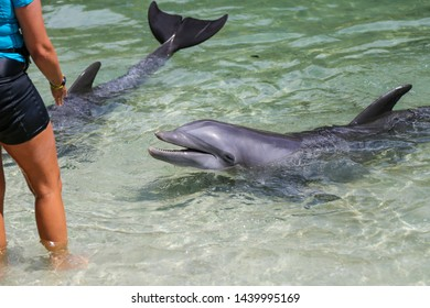 Happy dolphin playing with humans