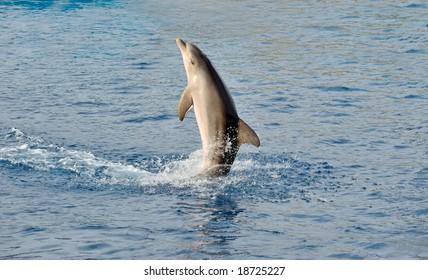 happy dolphin swimming