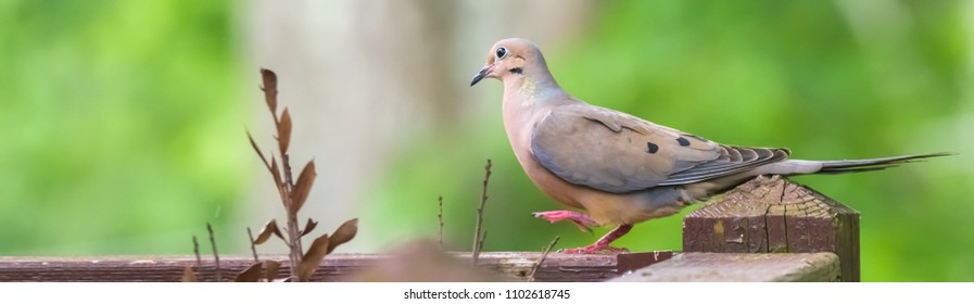 Happy dove marching on deck