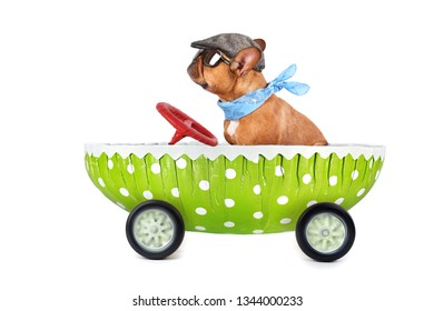 happy easter bulldog drives in easter egg