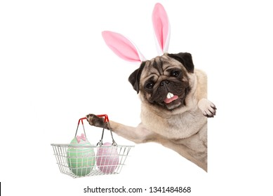 Happy Easter bunny pug dog with bunny teeth and pastel easter eggs in wire metal shopping basket, isolated on white background