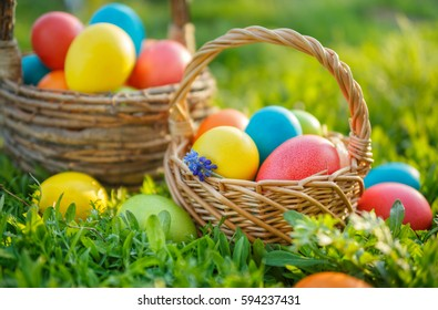 Happy Easter. Colorful Easter eggs in baskets, on the spring the grass.