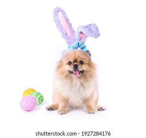 Happy Easter day colorful eggs and Cute puppies Pomeranian Mixed breed Pekingese dog Wear bunny ears sitting isolated on white background. - Shutterstock ID 1927284176