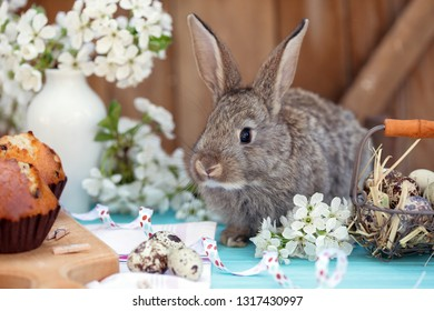 happy easter - little rabbit with a basket of eggs  and cupcakes on the background of cherry blossoms