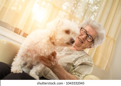 Happy elderly woman patting her small Maltese dog at home.