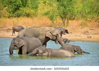 Happy elephant family