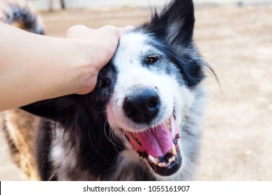 A happy face of dog when she receives love