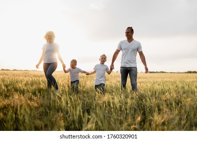 A happy family, dad, mom and two sons walk in a wheat field and watch the sunset. White T-shirts. Harvest cereals.