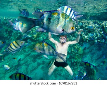 Happy family, man in snorkeling mask dive underwater with fishes in coral reef sea. Travel lifestyle, water sport outdoor adventure, summer beach holidays with child.
