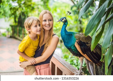 Happy family mom and son watching peacock in the park