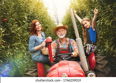 Happy family on the tractor in the orchard. Senior man drives the tractor while the granddaughter with raised hands enjoys the ride