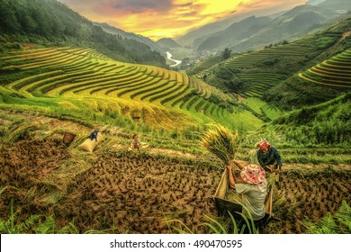 Happy family in rice terraces Mu cang chai,Yenbai,Vietnam.
