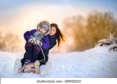 the happy family rides the sledge in the winter wood, cheerful winter entertainments, everything is covered with snow around