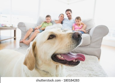 Happy family sitting on couch with their pet yellow labrador in foreground at home in the living room