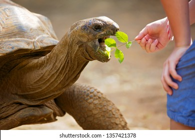 Happy family, toddler, older children and parents, feeding giant tortoises in a  park. Big turtle and kids
