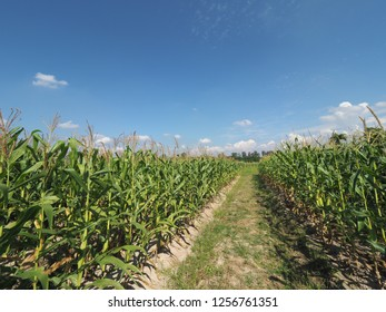 happy farm skyblue