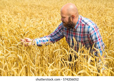 Happy farmer with a beard examines a field of wheat , great harvest