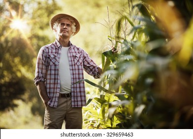 Happy farmer in the field checking corn plants during a sunny summer day, agriculture and food production concept