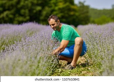 Happy farmer in his lavender plantation in a sunny day