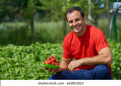 Happy farmer presenting freshly picked strawberries from his garden