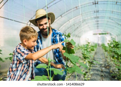 Happy father and his son enjoying in a greenhouse, he is showing to his son how cucumbers growing.