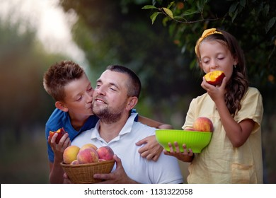 Happy father with two kids  picking peaches in the garden