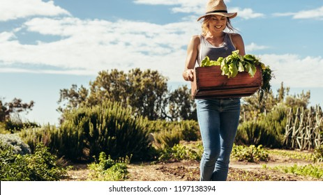 Happy female gardener carrying crate with freshly harvested vegetables in field. Woman working in her farm. Homegrown produce and sustainable living concept.