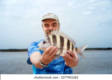 Happy  fisherman is holding a fish  Southern sheeps head (Archosargus probatocephalus)  against the sea