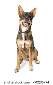 Happy friendly mixed shepherd breed medium size dog with open mouth and happy expression