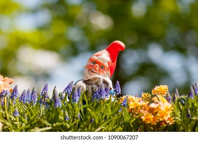 Happy garden goblin with rabbit on sunny day agains blurry background