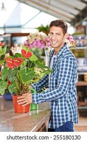 Happy gardener with a flamingo flower (anthurium) in a nursery shop
