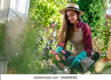 Happy gardener woman in gloves, hat and apron plants petunia flower on the flower bed in home garden. Gardening and floriculture. Flower care