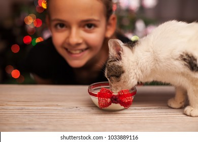 Happy girl with her rescued kitten at christmas time - watching her furry friend drinking milk, shallow depth