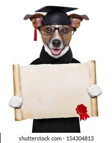 happy graduate dog holding a big diploma