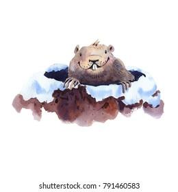 Happy Groundhog Day - hand drawing watercolor groundhog